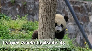 【Super Panda】Episode 46 | iPanda