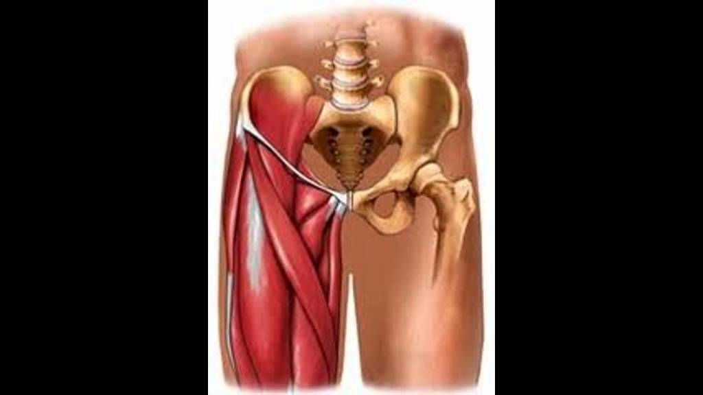 MUSCULO ADUCTOR - YouTube