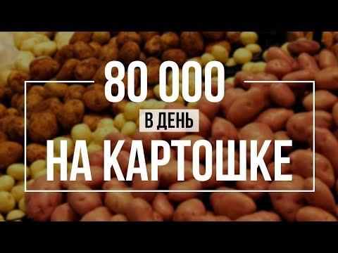 Оптовый бизнес нуля: 80000 рублей за день на картошке. Видео с погрузки