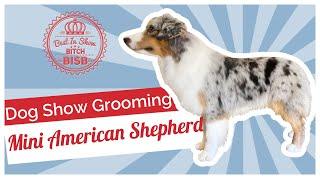 Dog Show Grooming: How To Groom a Miniature American Shepherd