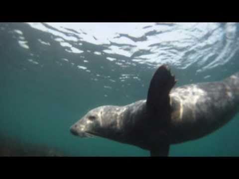 scuba diving ireland east
