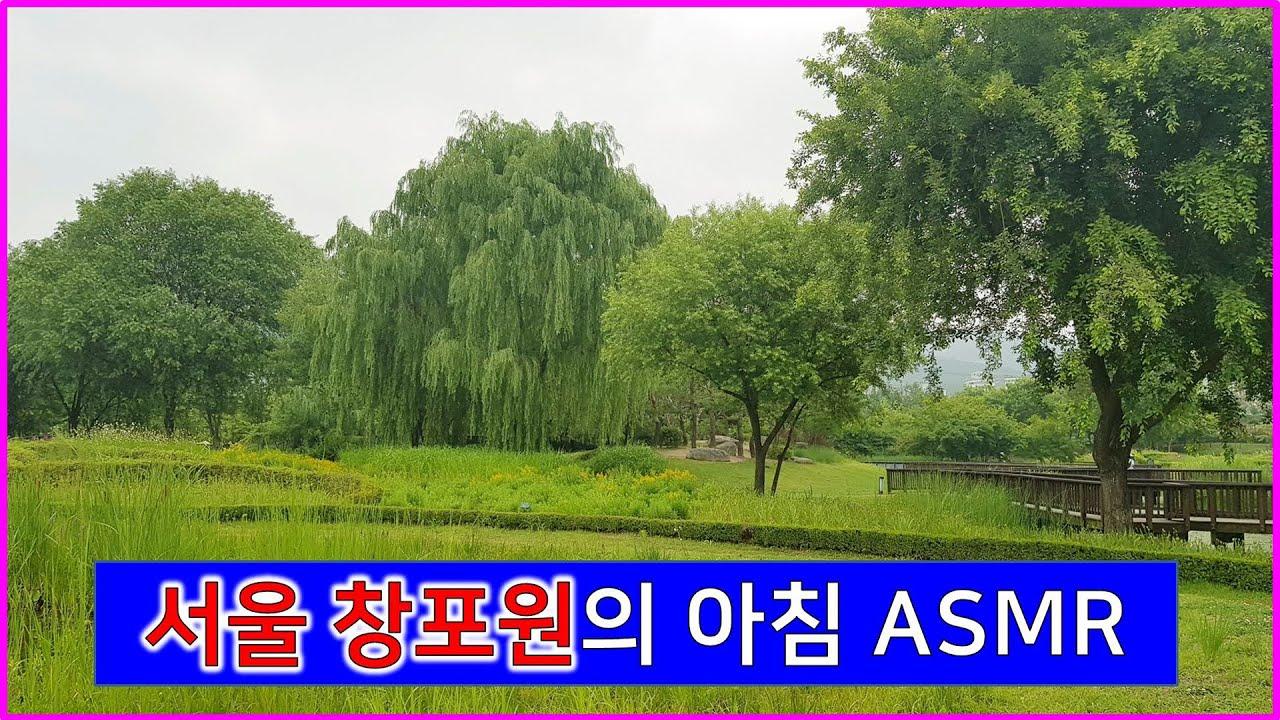 [어디갈까27] 서울 창포원 아침 공원 새소리 ASMR 산책하기좋은곳 가족나들이