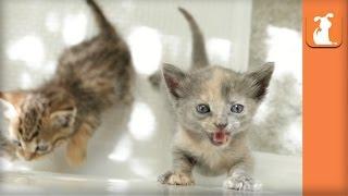 4 Adorable Kittens in a Bath Tub  Kitten Love