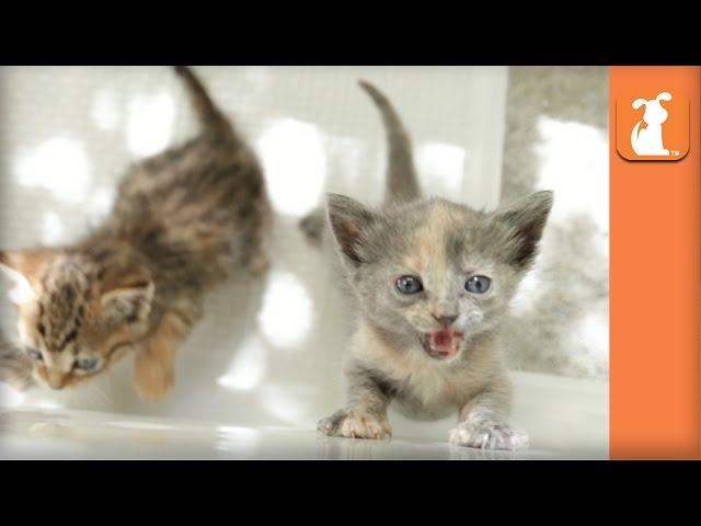 4 Adorable Kittens in a Bath Tub - Kitten Love