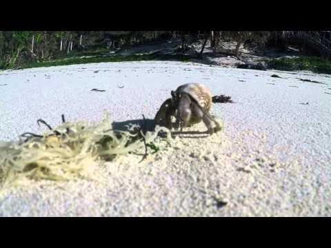 GoPro Fiji Trip: Hermit Crabs