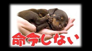 犬のしつけ、「命令しない」 日本 森田流犬のしつけ方 | 動画講座 http:...