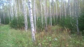 Metsänhoito harrastuksena