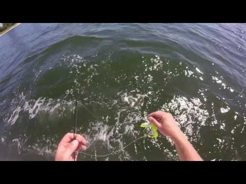 Fluke Fishing The Manasquan River New Jersey 8/4/2016
