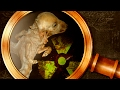 Chernobil: as terríveis consequências | Nerdologia