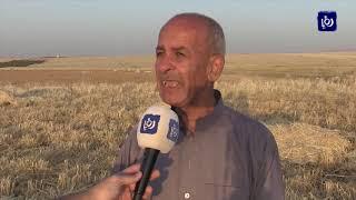 مزارعون في إربد يتهمون وزارة الزراعة بالغش في بذار الشعير - (6-6-2019)