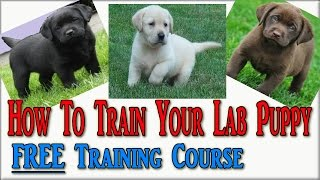 How To Train Labrador Puppies ♥ Click The Link Now ♥ Labrador Retriever Puppies ♥ Labrador  Puppy ♥♥
