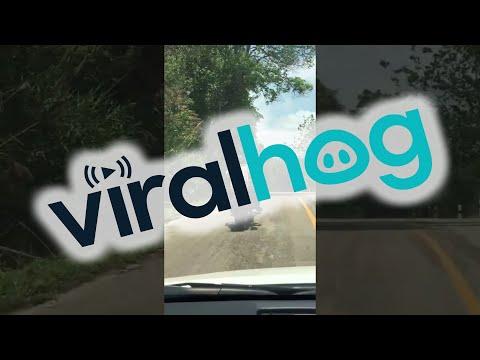 किश्मत अच्छी थी बाइक सवार सांप के हमले से बच गया - Snake ne motorcycle chalak par kiya hamla