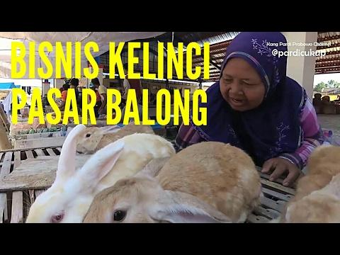 Peluang bisnis kelinci | Ini harganya di Pasar Balong