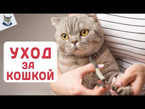Вопрос: Как ухаживать за котом-спинальником?