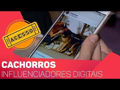 Cachorros influenciadores digitais - TV SOROCABA/SBT