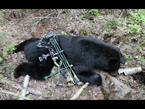 MY FIRST ARCHERY BLACK BEAR HUNT