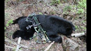 MY FIRST ARCHERY BLACK BEAR HUNT
