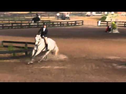 Video of Cartagena BD ridden by Kirsten Pollin from ShowNet!