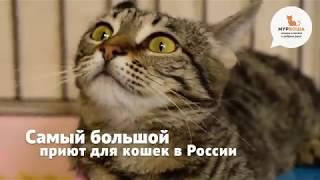 """Самый большой частный приют для кошек """"Муркоша"""""""