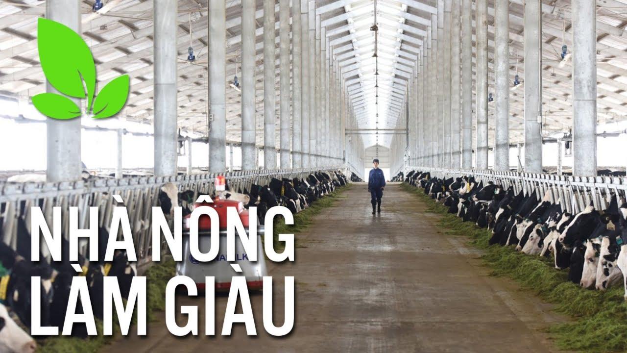 Hiệu quả mô hình chăn nuôi bò sữa ứng dụng công nghệ cao I VTC16