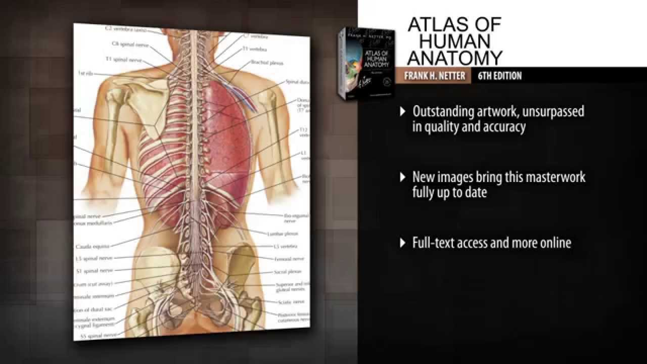 Atlas Of Human Anatomy 6th Edition Youtube