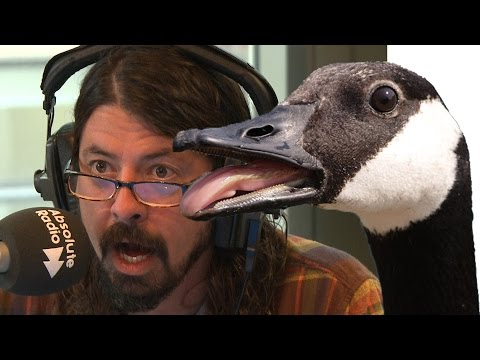 Dave Grohl chased by a goose - the full story