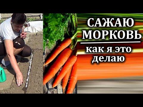 Как посадить морковь весной правильно Правила посадки моркови