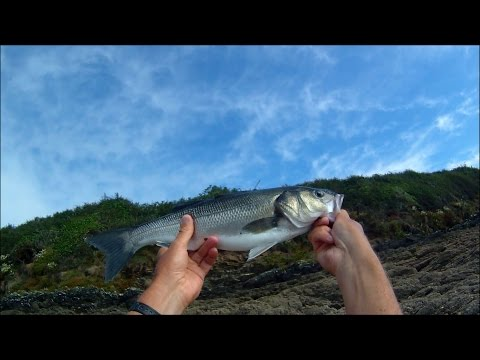Shore Fishing - Bubble Float Fishing for Sea Bass with Shrimp