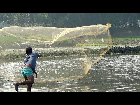 Net Fishing | Catching Fish With Cast Net | Net Fishing in the village (Part-160)