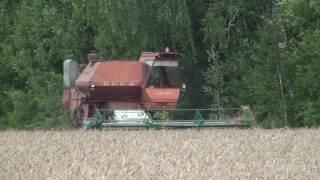 СК -5М-1 НИВА скашивает в валки пшеницу.