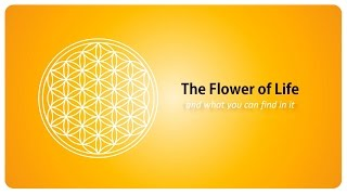 the flower of life and what you can find in it sacred geometry