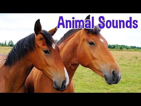 Thumbnail: Animal Sounds for Children (20 Amazing Animals)