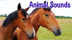 Eläinten ääniä