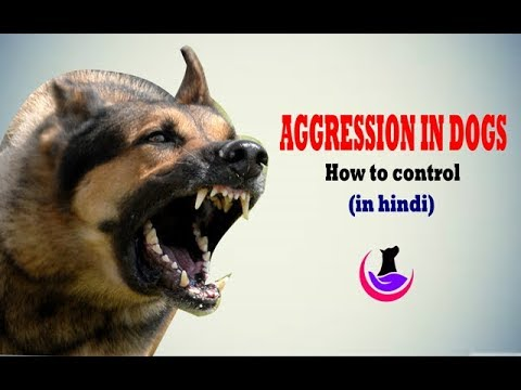 Aggression in dogs: How to control( in hindi)
