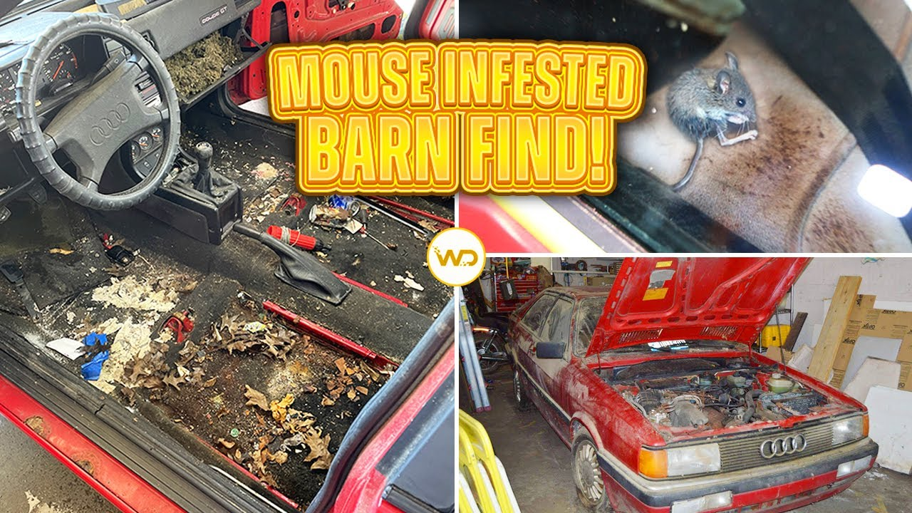 ABANDONED MOUSE INFESTED BARN FIND First Detail in Years Audi! Satisfying Car Detailing Restoration