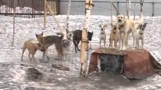 Бродячих собак и кошек в Вологде будут убивать
