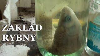 Czarnobylski zakład rybny /exploring/ Chernobyl fish plant