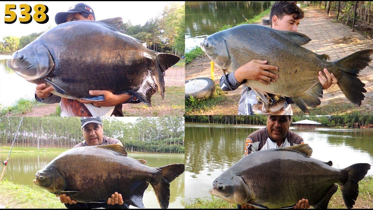 Pexe Loko - Os Gigantes do interior paulista - Fishingtur na TV 538