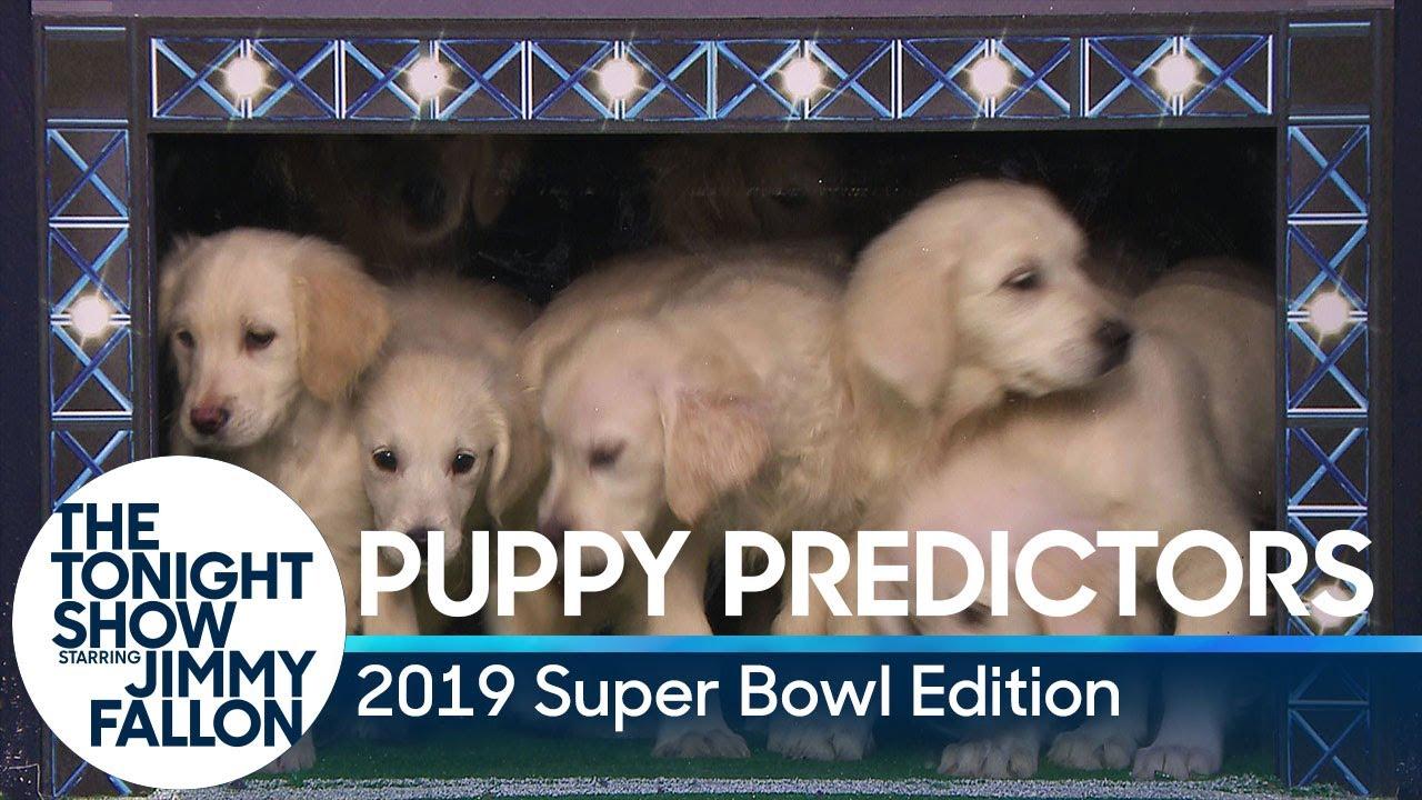 Puppies Predict the Winner of Super Bowl LIII