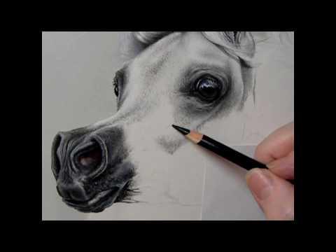 Arabian Horse Pastel Painting Demonstration
