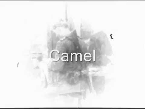 Camel  Vopos
