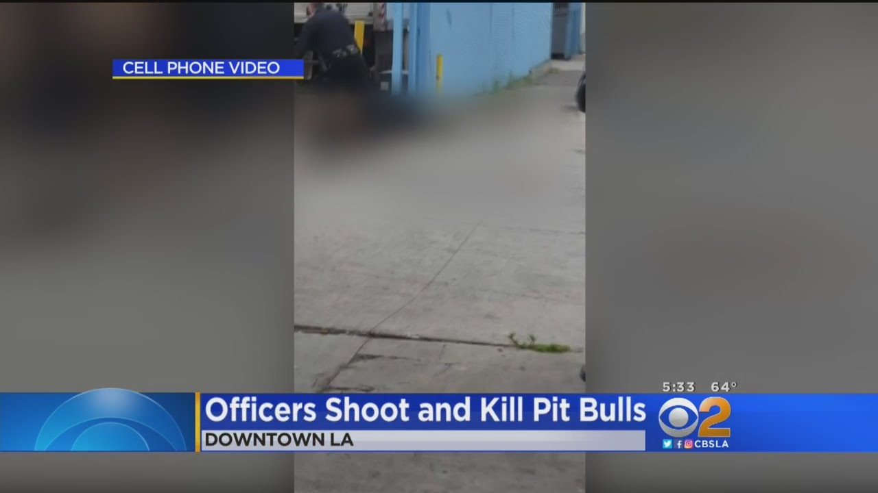 Police Fatally Shoot 2 Pit Bulls Attacking Man, Small Dog