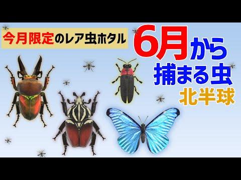 森 あつ ニジイロ クワガタ