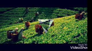 TEA INDUSTRY OF SRI LANKA