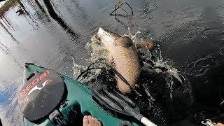 VOCÊ NUNCA VIU TANTO PEIXE GRANDE DIFERENTE NUM LUGAR SÓ! Pescaria.