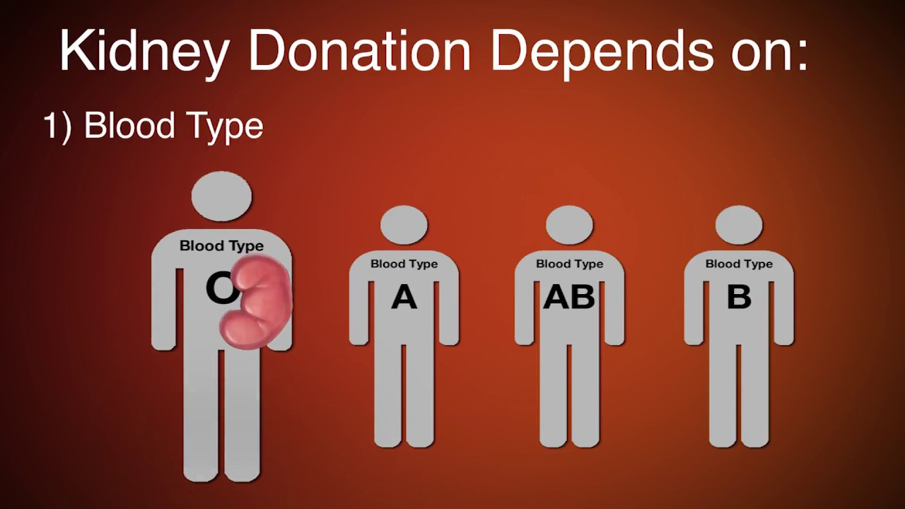 Kidney donation and transplant requirements