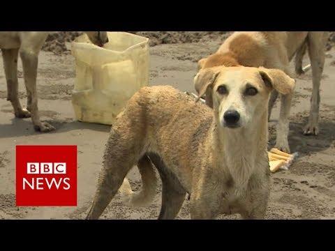 Pakistan's island dogs saved by fishermen - BBC News