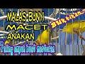 Kecial Kuning Masteran Ampuh  Mp3 - Mp4 Download