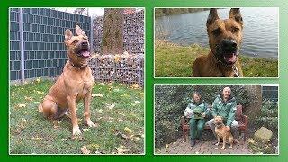 Hundevermittlung - November/Dezember 2017 (Tierheim Hannover TV) thumbnail