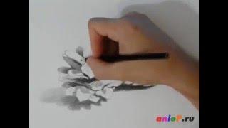 Как нарисовать сосновые шишки